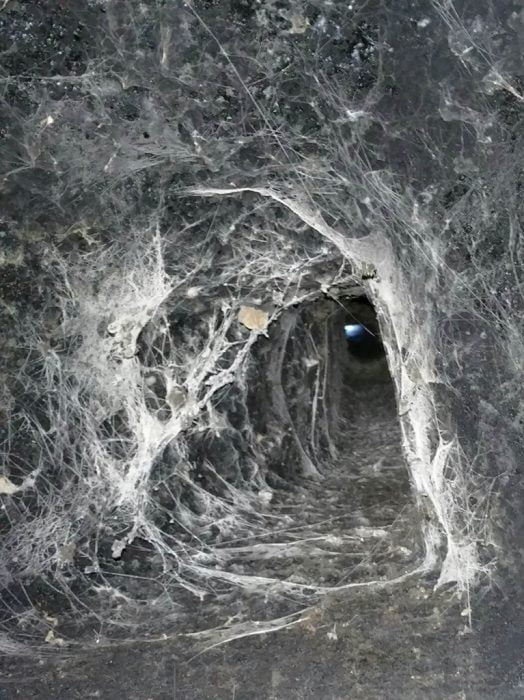 Spider webs inside chimney flue
